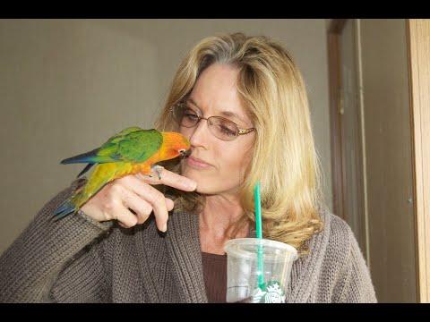 Conure Parrots