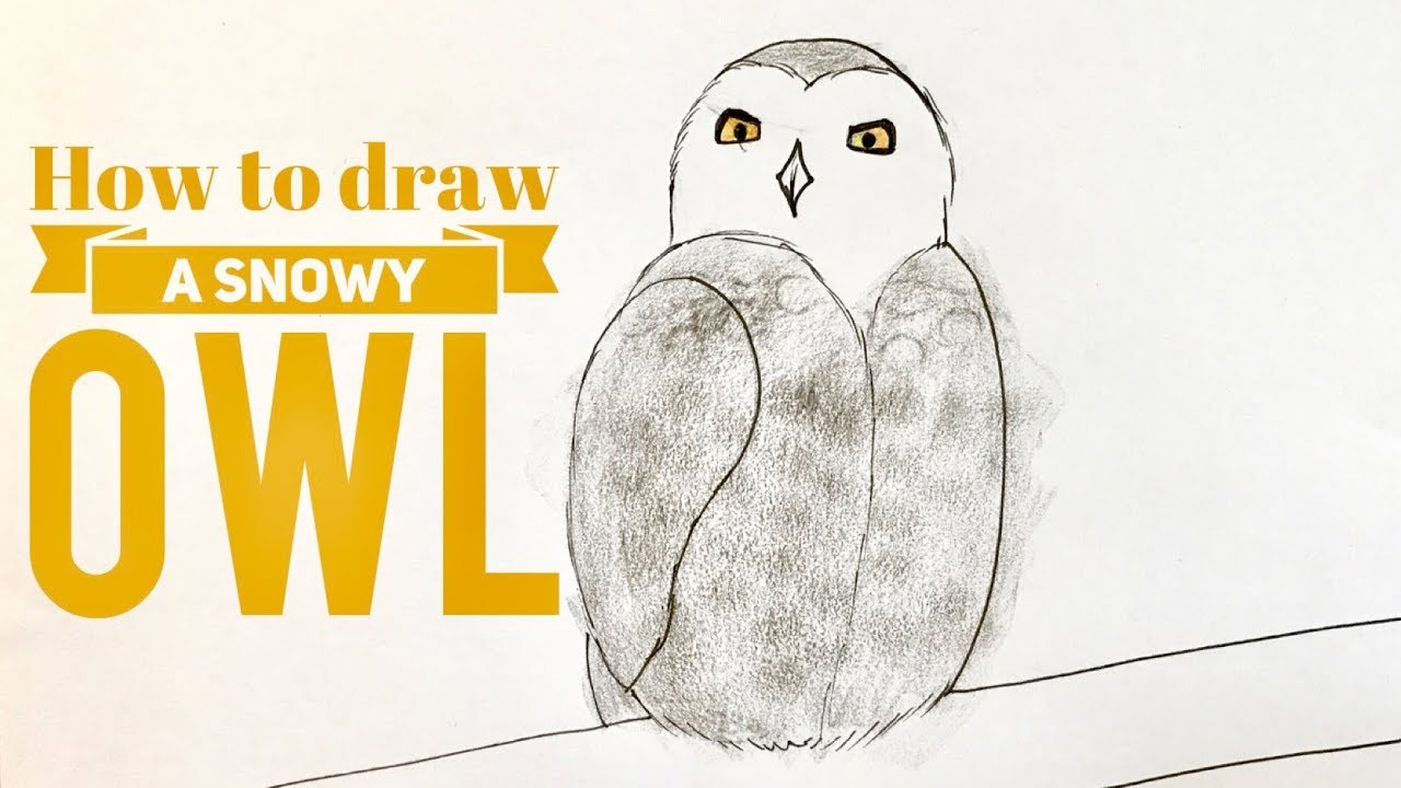 beginners how to draw a snowy owl youtube