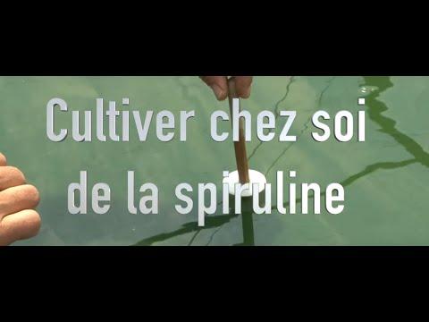 Ou Acheter La Spiruline : Code promo - Herbes - Bénéfice | Pourquoi faire une cure ?