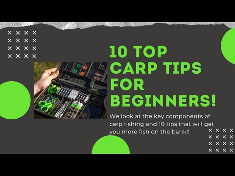10 Carp Fishing Tips For Beginners | 2020