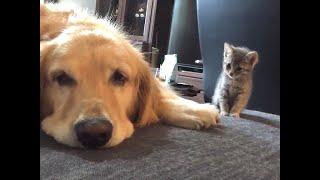 よそよそしかった犬と猫が…決定的瞬間