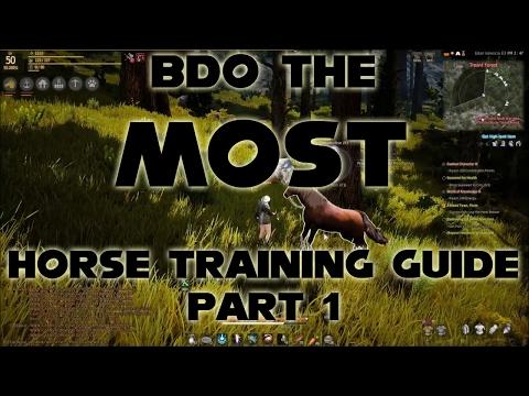 BDO The Most Detailed Training Guide | Part 1 | Black Desert Online