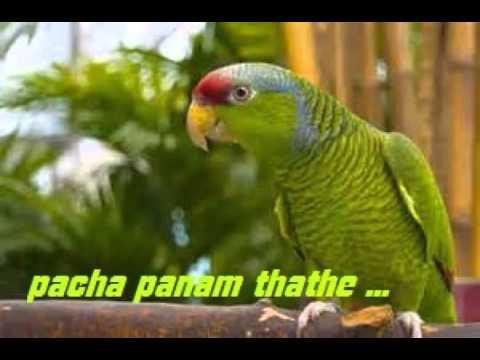 pacha panam thathe yesudas song