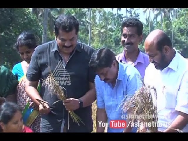 Actor Mukesh Joined in Harvest festival at Actor Sreenivasan's Agriculture Land