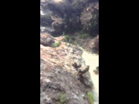 Underwater video shooting in Champagne Pool, Fraser Island
