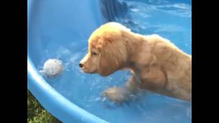 Summer Splash Top Funny Animals Try Not to Laugh 