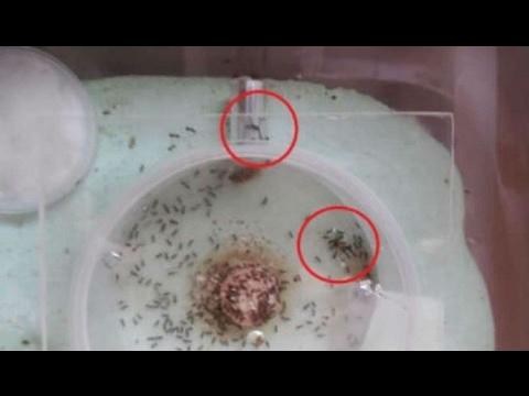 Tips membasmi nyamuk dengan mudah.