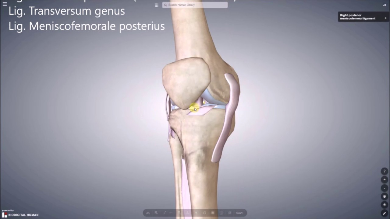 Knie komplett - YouTube