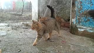 Кошки Замедленная съемка.
