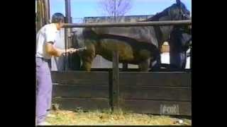 Nature strikes back - horse kick - Livestock branding with Casualty