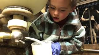 Lucas helping milking those cows, and drinking fresh warm milk