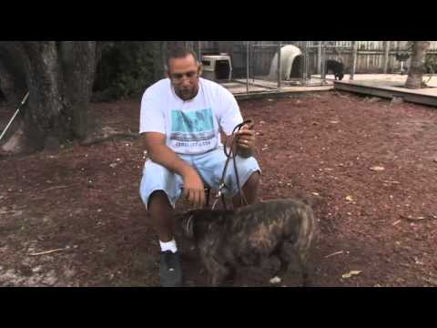 how-to-make-a-dog-stop-biting