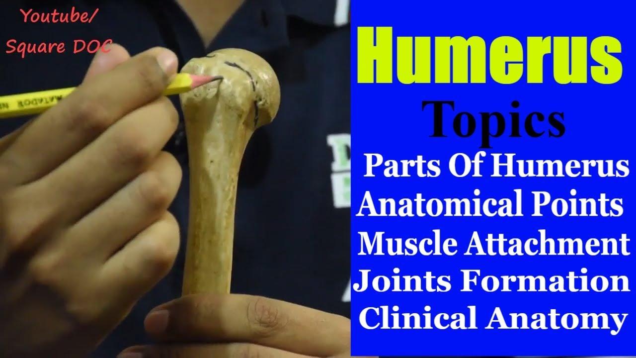 Humerus Bones Anatomy | Bangla | Square DOC - YouTube