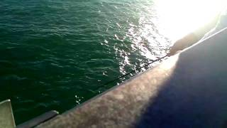 Rickenbacker Causeway fishing for Mackerel