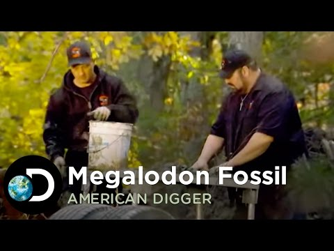 Looking for the Megalodon Fossil | American Digger