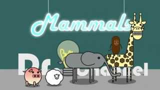 'What are Mammals?