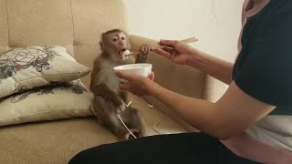 Monkey Baby Nui | NUI has lunch with her mother