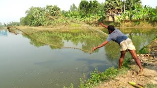 Net Fishing   Catching Fish With Cast Net   Net Fishing in the village (Part-203)