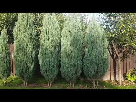 #3 200 вечнозелёных растений на участке 13 соток! МНОГО это или МАЛО?