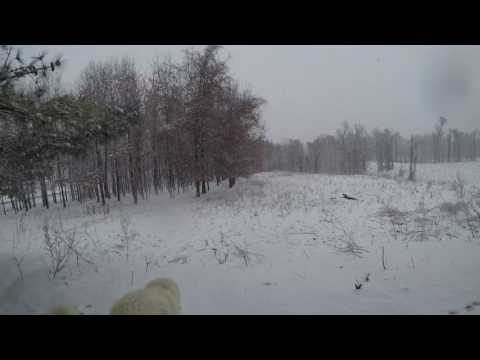 March Snow - Dairy Goats & Livestock Guard Dog