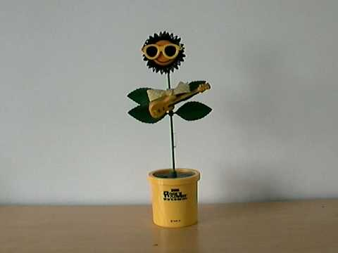Sunflower - Live In America
