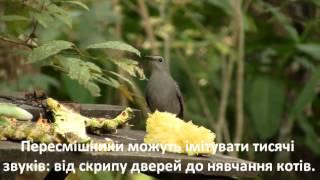 Цікаво про птахів