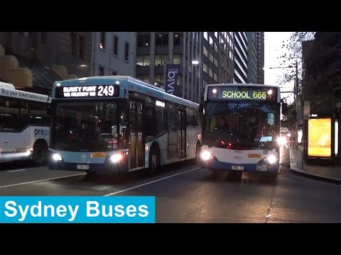 Buses In Sydney City During Peak Hour - Sydney Transport