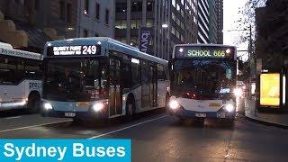 Buses in Sydney City during peak hour - Sydney Transport
