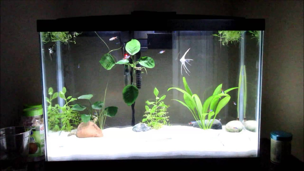 Freshwater fish tank upkeep - Freshwater Aquarium Fish Maintenance How To Set Up A Low Maintenance Planted Aquarium