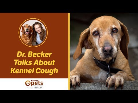 kennel-cough-in-dogs