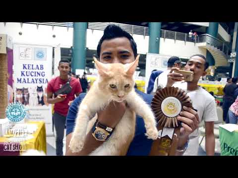 EKSPO KUCING 2017    KKM/FIFE INTERNATIONAL CAT SHOW PART 1