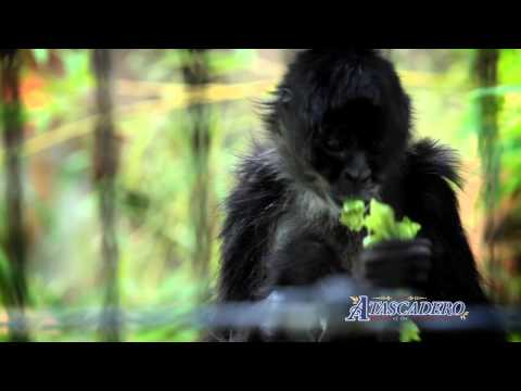 Atascadero's Charles Paddock Zoo