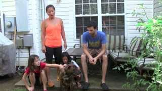 Off Leash Dog Training Client Video Testimonial  Wyatt Pit X Boxer