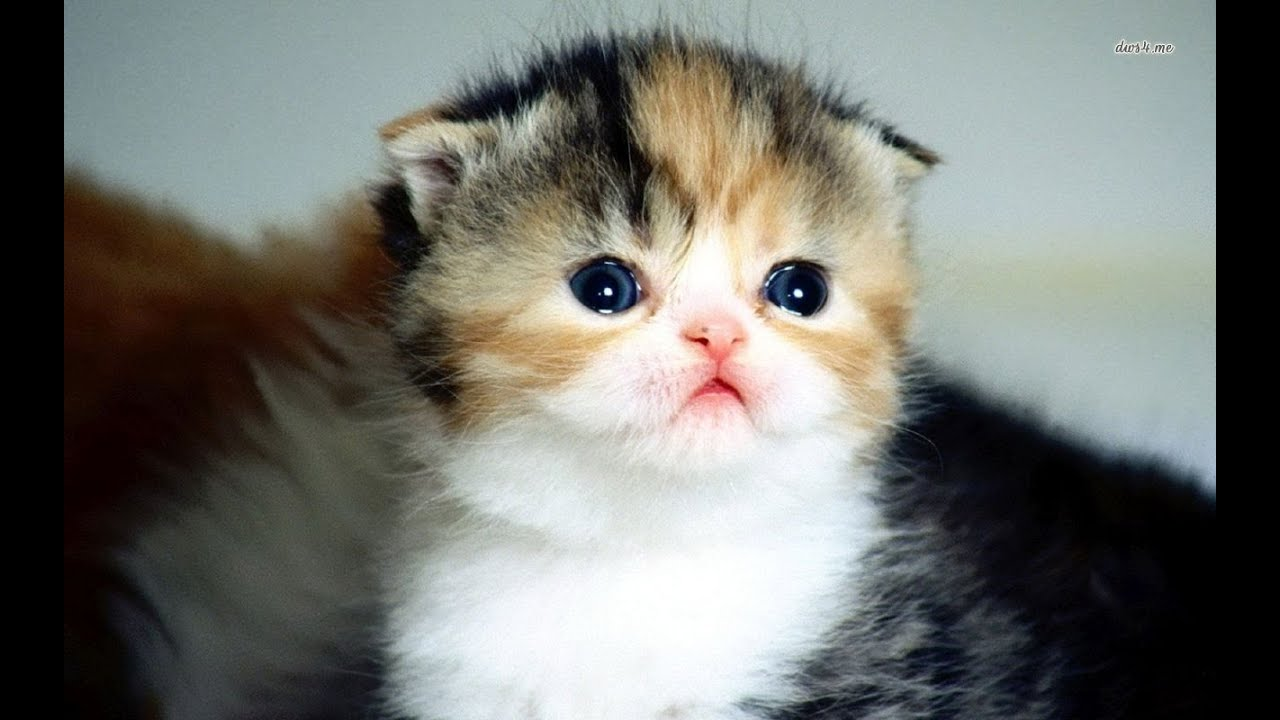 Cute Baby Cats For Sale