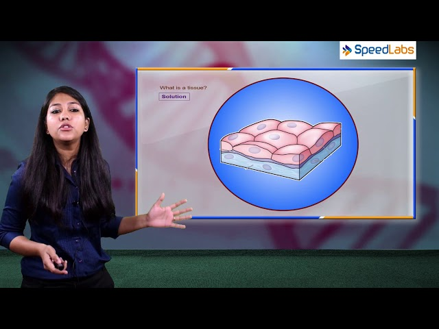 NCERT Solution for Class 9th Biology | Tissue | Q1