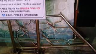 주문진 수산시장 오징어 3마리 2만원 회뜨기 3천원(1…