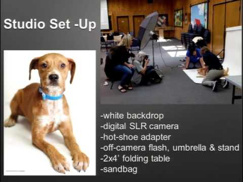 Shelter Photography: Creating Pet Celebrities