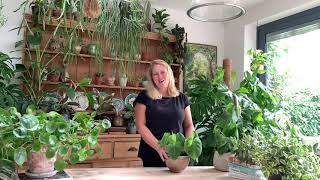 Happy Houseplants - How to Care for Your Houseplants