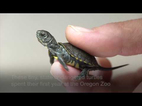 Carson - The secret Turtle Haven in the Columbia Gorge!