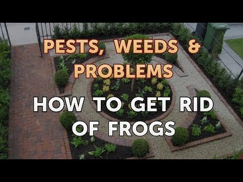 How To Get Rid Of Frogs In Backyard how to get rid of frogs - youtube