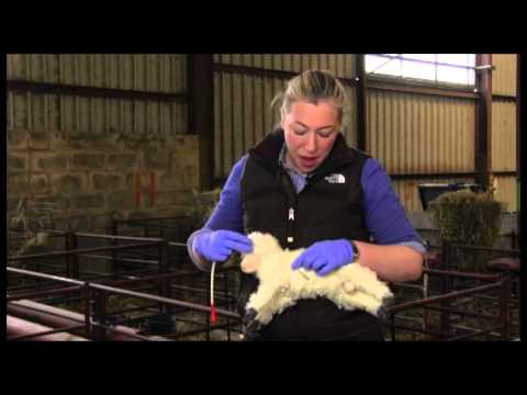 Practical How to guides for livestock farmers