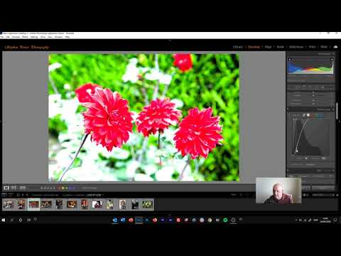 Using the New Tone Curve in Lightroom Classic 2020