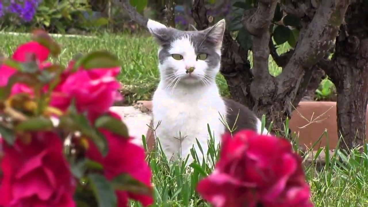 Муха на носу кота
