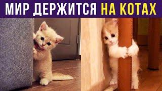 Приколы с котами. Мир держат КОТЫ! | Мемозг #318