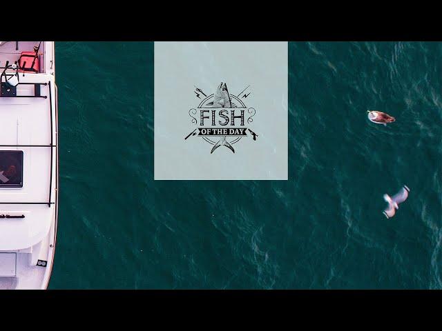 Fish of the Day I Saison 4. Épisode 5 - Carte postale d'Auckland