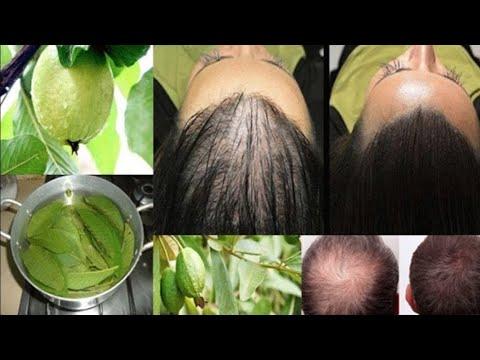 Dein Haar wird mit diesen Blättern den Ausfall stoppen und wie verrückt wachsen!!!