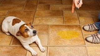 Utanmış Ve Suçlu Köpekler  Komik Ve Sevimli Köpek Derleme