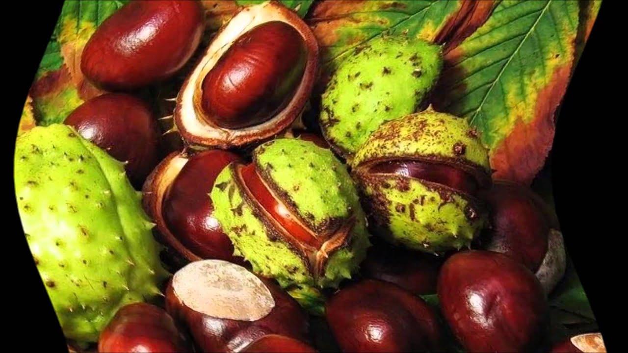 Тимьян обыкновенный (thymus vulgaris) 🌿 обыкновенный тимьян обзор .