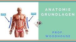 Anatomie: Grundlagen