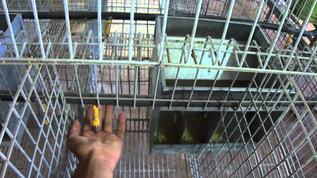 cages pour lapins et volailles youtube. Black Bedroom Furniture Sets. Home Design Ideas